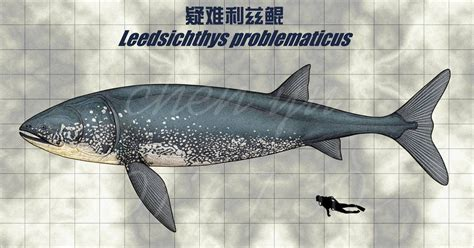 We're on much firmer ground when it comes to leedsichthys'. Leedsichthys problematicus by https://www.deviantart.com ...