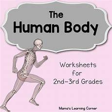 The Human Body Worksheets  Mamas Learning Corner