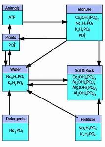 Phosphorous Cycle Diagram