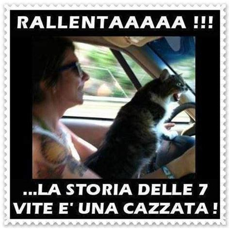 Donne Al Volante Divertenti 18 Best Images About Immagini Divertenti On