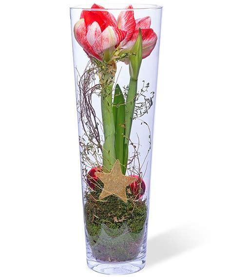 amaryllis im glas mit moos amaryllis im glas weihnachten weihnachtsblumen weihnachten und blumen