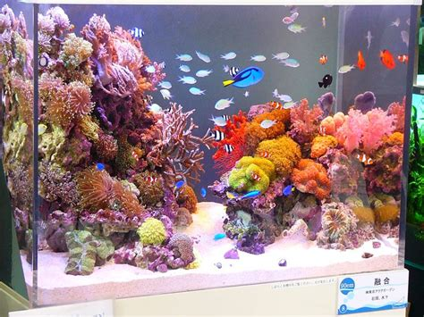 17 best images about saltwater fish tank on fish aquariums saltwater aquarium and