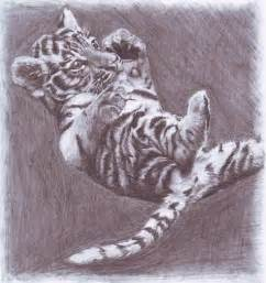 Baby Tiger Drawings Easy