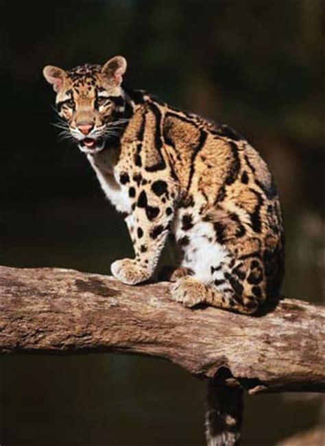 rare animals  nepal notes  qa  tests