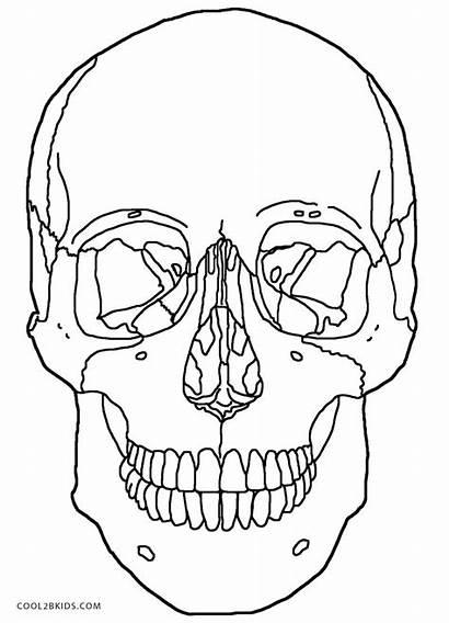 Coloring Pages Skull Anatomy Skulls Printable