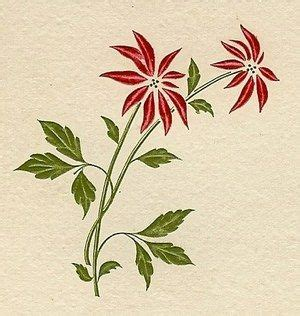 poinsettia images  clipart