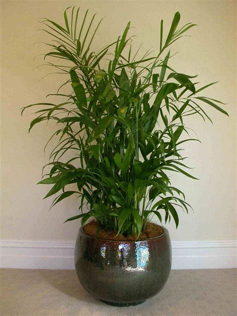 non toxic houseplants for cats non toxic house plants for better iaq living room