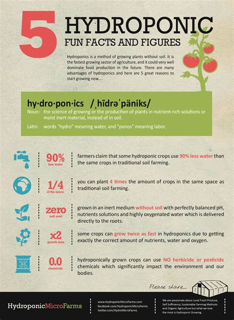 5 Hydroponic Fun Facts And Figures Visually
