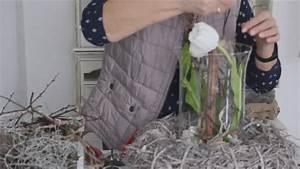 Frühlingsdeko Im Glas : fr hlingsdeko tulpen im glas b rbel s wohn deko ideen youtube ~ Orissabook.com Haus und Dekorationen