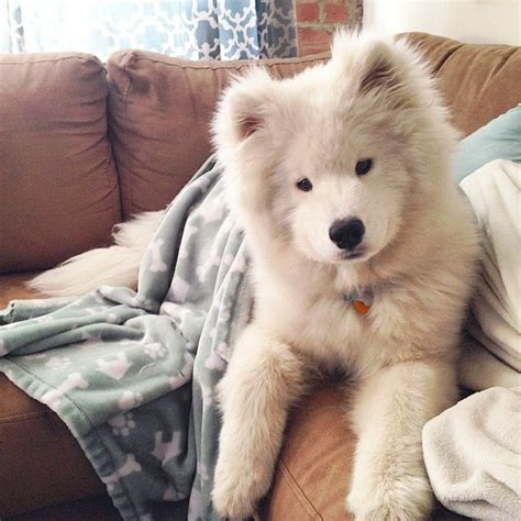 1000 Images About Dogs On Pinterest