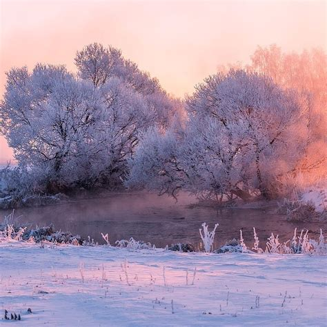 Aesthetic Winter Wallpaper by Snow Photography Winter Design Landscape Trees Pink