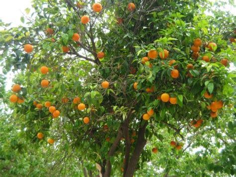 cuisine irlandaise l 39 orange oranger navels
