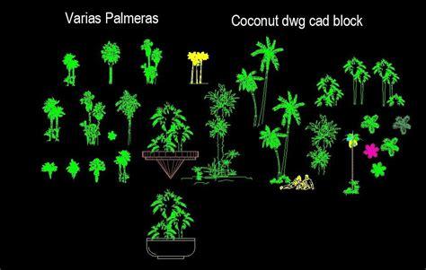 palm trees cocnut  bonsai palms front view