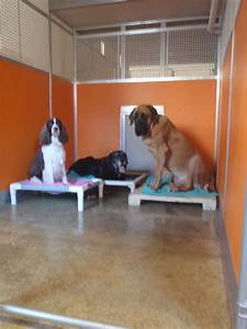 Waggin39 tails junction dog cat boarding daycare for Dog boarding website