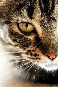 Best 25+ Tabby cats ideas on Pinterest | Tabby cat names ...