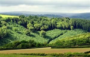 Field hills forest trees landscape wallpaper | 2560x1600 ...