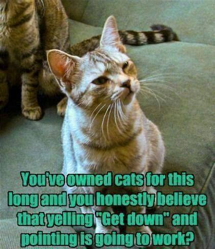 laugh wednesday pet humor chris cannon