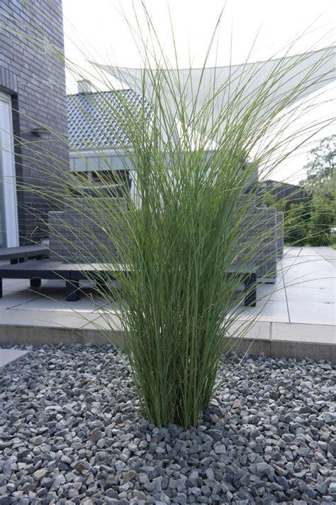 gräser für den garten garten chinaschilf gracilimus miscanthus sinensis gracillimus g 252 nstig kaufen