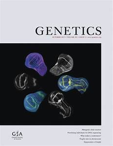 An Ancient Yeast For Young Geneticists  A Primer On The