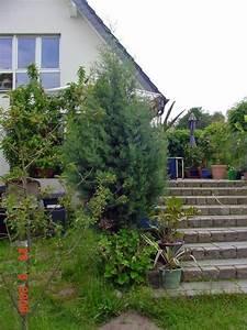 Zypresse Wird Braun : zypresse schneiden zypressen pflanzen schneiden pflege ~ Lizthompson.info Haus und Dekorationen
