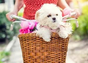 Fahrradkorb Hund Hinten : hund fahrradkorb perfect dog in bicycle basket sweet hund ~ Kayakingforconservation.com Haus und Dekorationen