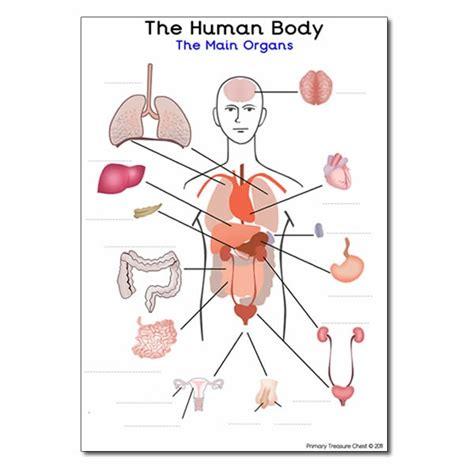 main organs   human body  worksheet  spaces