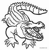 Alligator Coloring Pages Drawing Printable Gator Florida Alligators Cute Cool2bkids Gators Head Crocodile Template Drawings Whitesbelfast Clipartmag Paintingvalley sketch template