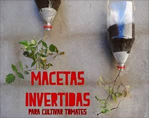 MACETAS INVERTIDAS Cultivo de tomate YouTube
