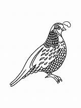 Quail Coloring Pages Printable Print sketch template