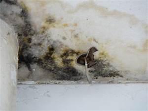 quant aux problemes d39humidite notre p39tit nid vert With champignon d humidite maison