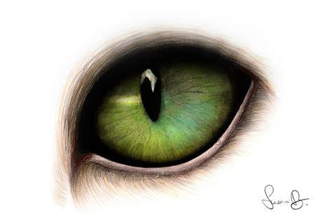 cat eye  strawberry   deviantart