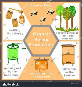 Vector Banner Honey Beekeeping Natural Eco Stock Vector ...