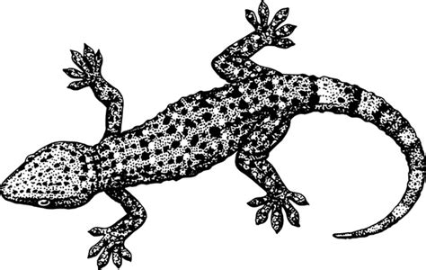 Gecko Free Vector In Open Office Drawing Svg ( .svg