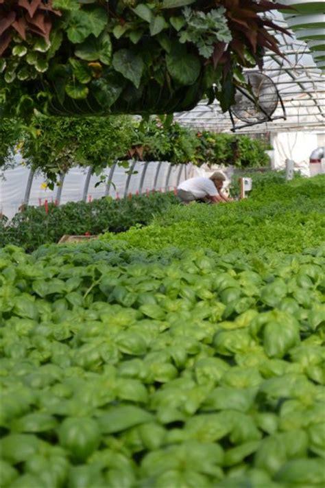 cuisiner le basilic jardins gobeil lapresse ca