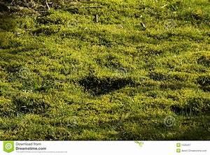 Moos Im Rasen : moos und torf im rasen lizenzfreie stockfotografie bild ~ Lizthompson.info Haus und Dekorationen