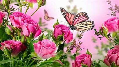 Screensaver Flowers Rose Desktop Wallpapers