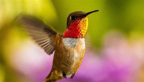 audubon society hummingbirds at home