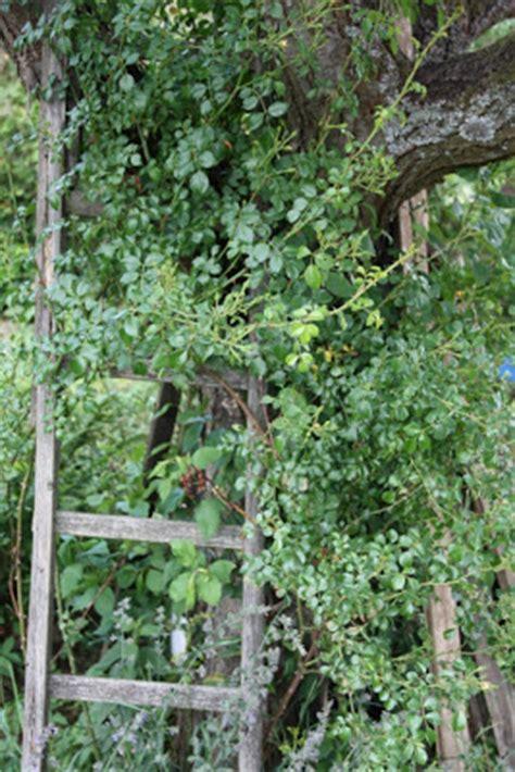 Der Garten Meiner Kindheit by Teacup In The Garden Der Garten Meiner Kindheit Teil 3