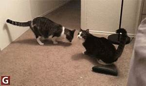 Rcucumbersscaringcats GIFs - Find & Share on GIPHY