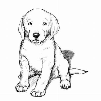 Retriever Coloring Golden Puppy Realistic Printable Dog