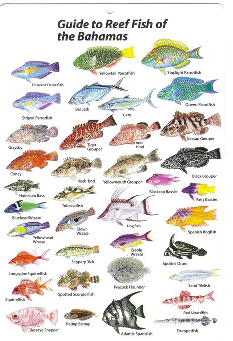 saltwater fish breeds connor brausens saltwater fishing