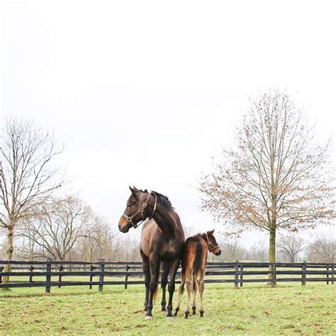 Bourbon State Horse Country Kentucky Bourbon Trail