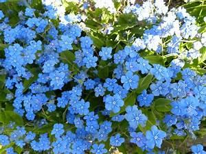 Garten Blumen Bilder : garten blumen blau ~ Whattoseeinmadrid.com Haus und Dekorationen