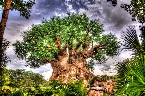 Tree of Life Wallpapers – AtDisneyAgain