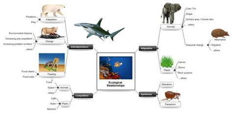 concept mapping  mindview mind mapping software
