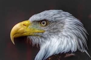 Las aves, sus diferentes picos y las funciones que desempeñan