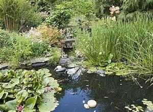 Plante Pour Bassin Extérieur : comment am nager un bassin dans son jardin ~ Premium-room.com Idées de Décoration