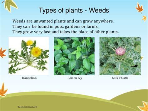 types of plants environmental science evs plants class ii