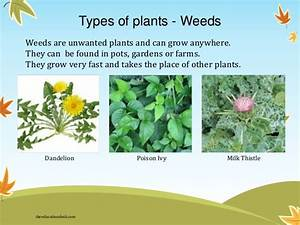 How Many Types of Plants are there in the World ? | Know ...
