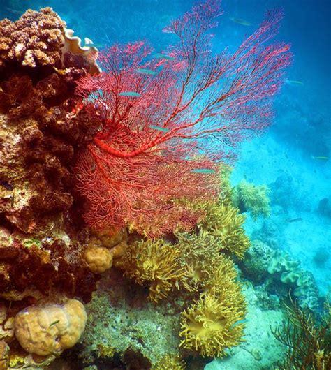 11 foto ini buktikan indahnya teluk saleman laut